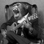 Animals Playing Musical Instruments as People (2)