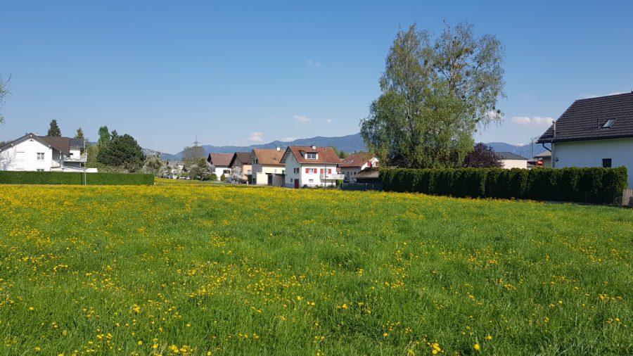 Boterbloemveldje in Lustenau