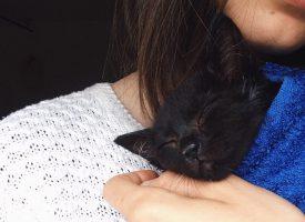 Shoegazers Slow Crush krijgen video, doneren aan kattenopvang